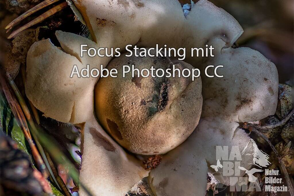 Focus Stacking mit Adobe Photoshop CC